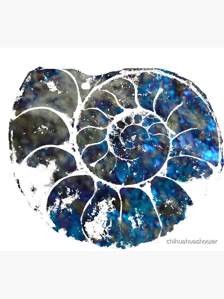 Ammonite by chihuahuashower