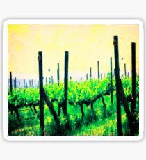 Woodinville Washington - Grape Vines Sticker