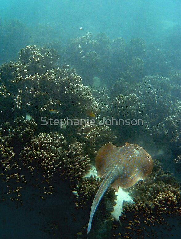 Gliding underwater by Stephanie Johnson