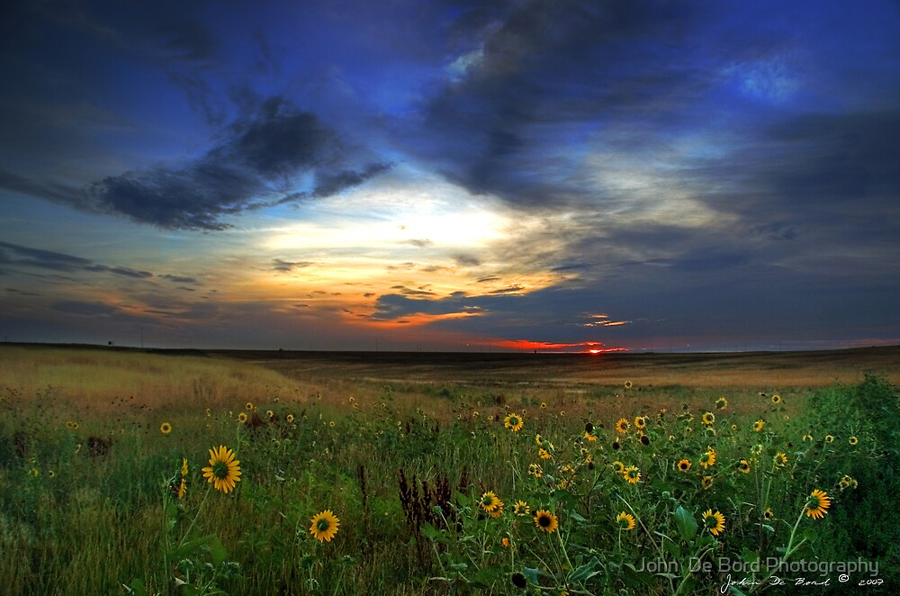 Wild Sunflowers of the Sunrise by John  De Bord Photography