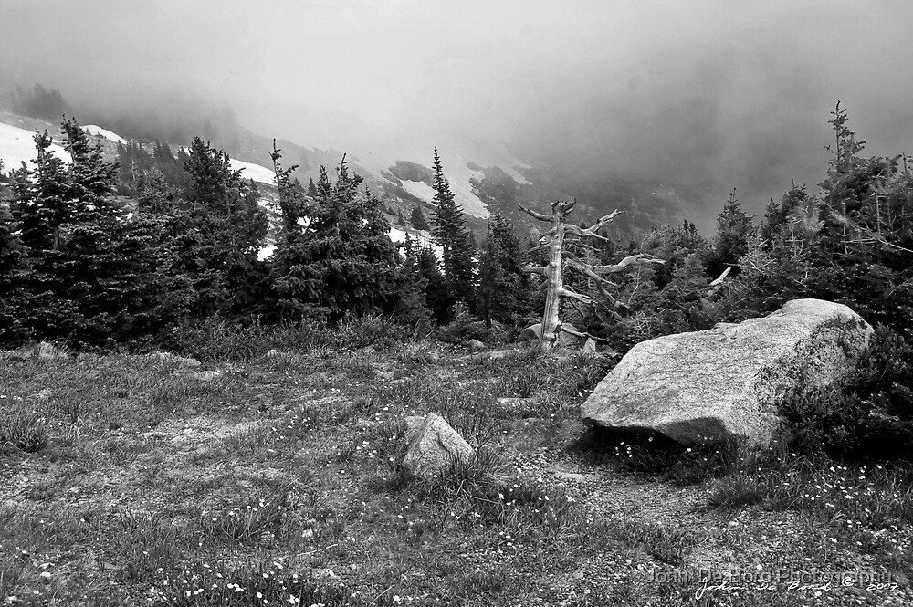Mountain Mist Along Trailridge Road  by John  De Bord Photography