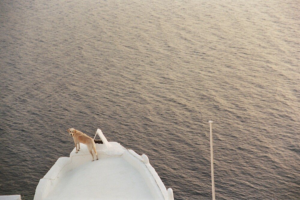 Dog, Santorini by Rachel Gellert