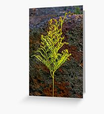 """Lone Fern"" Greeting Card"