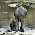 ANOTHER WONDERING MOTHER AND HER BABY -  THE AFRICAN ELEPHANT – Loxodonta Africana by Magriet Meintjes