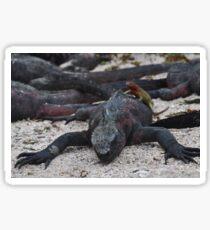 Galapagos land iguana with lizard on it's back Sticker
