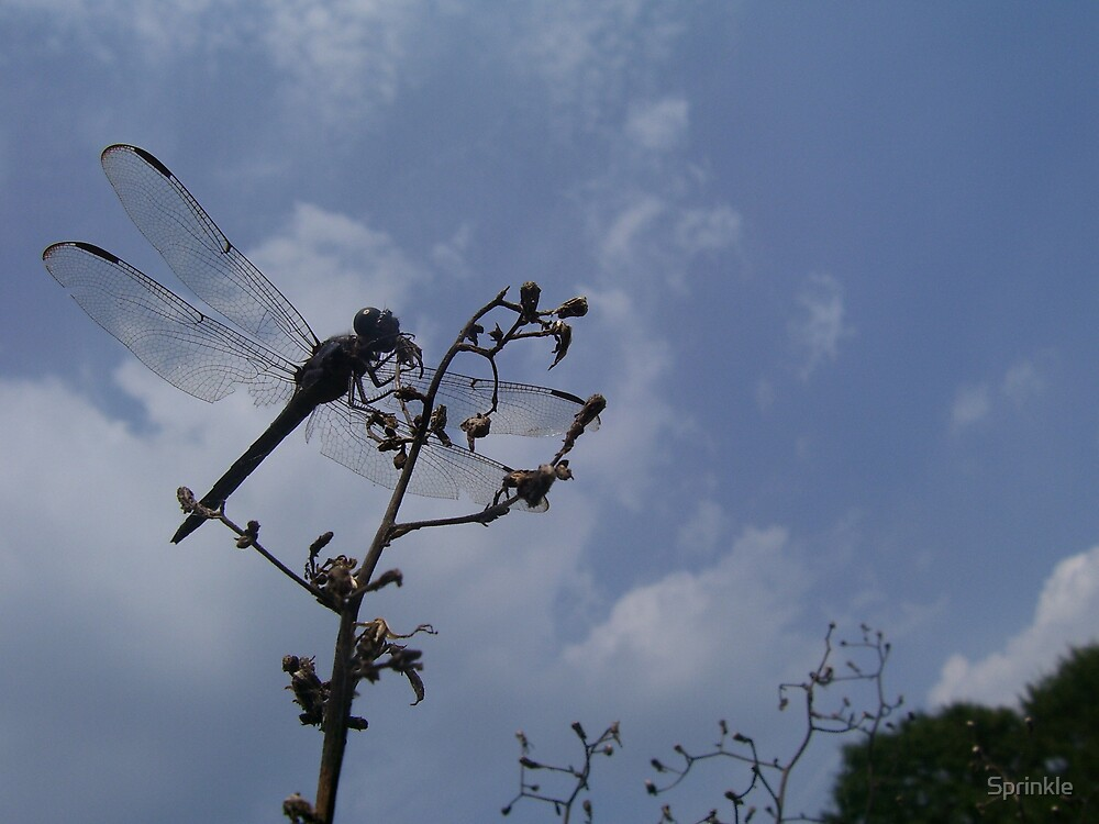 Dragonfly in Drought by Sprinkle