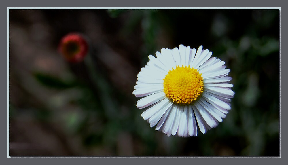 Flower by Olaide
