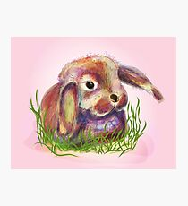 cute bunny in grass Photographic Print