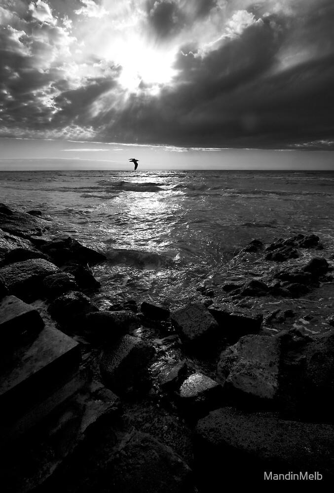 Seagull Affair by MandinMelb