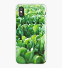 Field, green, food, vegetables, south, Italy, mediterranean, sunset, landscape, dry stone wall iPhone Case/Skin