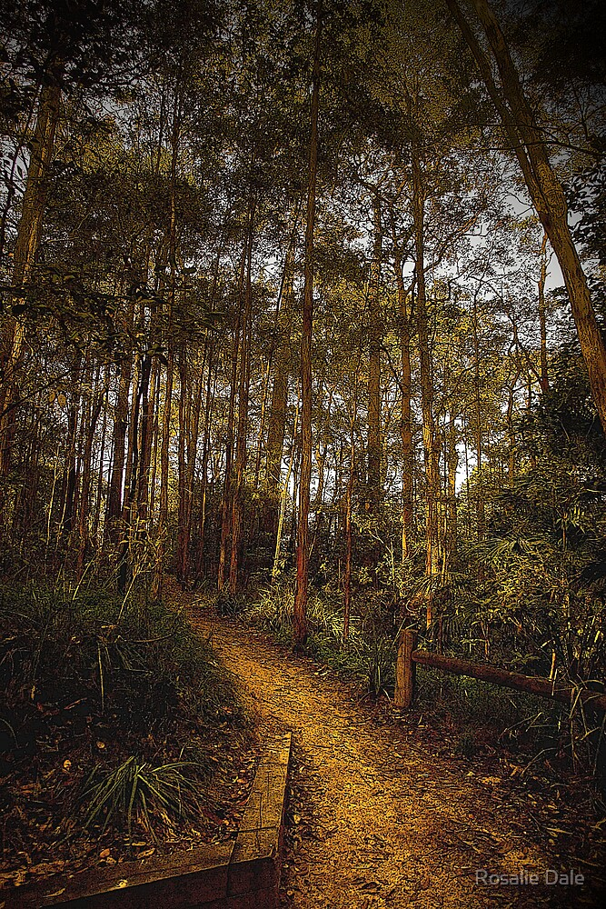 Bush path by Rosalie Dale
