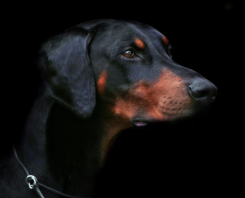 Dobermann by Natalie Manuel