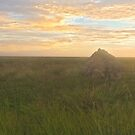 roebuck plains termite mounds sunset  by Elliot62
