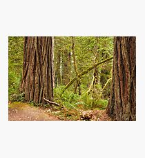 Ancient Forest Photographic Print