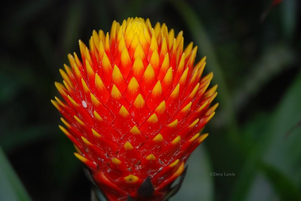 flower 7 by ukgun