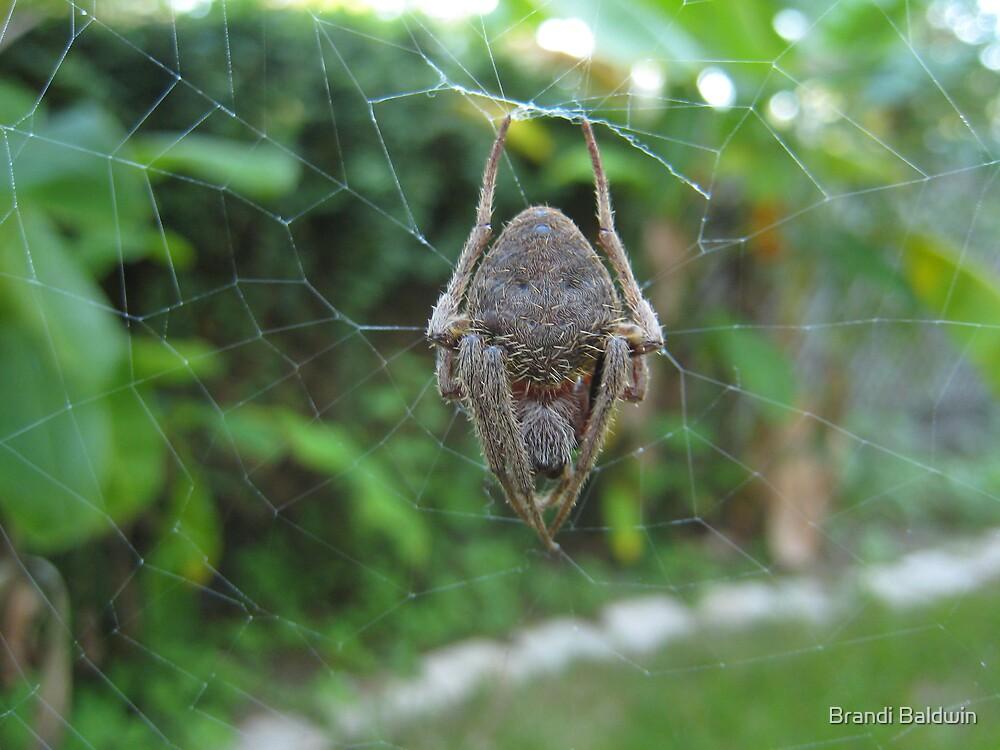 Bat Spider by Brandi Baldwin