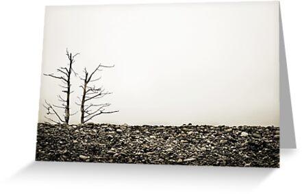 Rock Garden by David Librach - DL Photography -