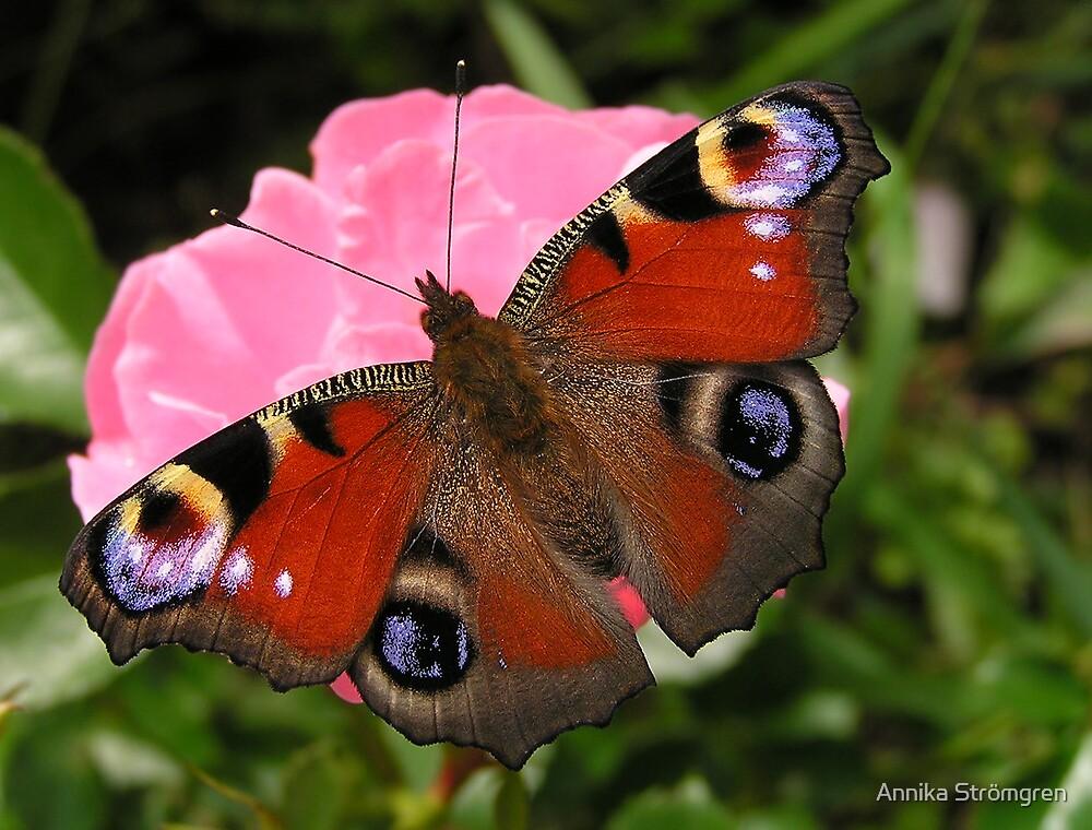 Peacock butterfly by Annika Strömgren