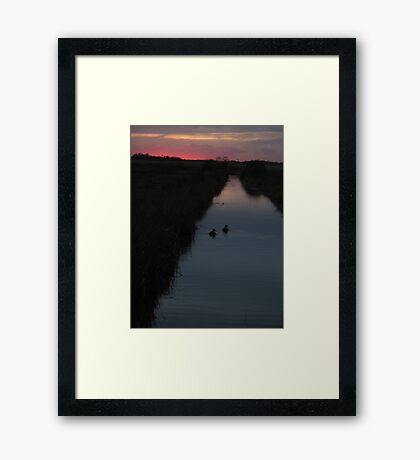 Swimming into the Sunset Framed Print
