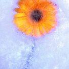 Yellow Gerbera In Ice by Ra12
