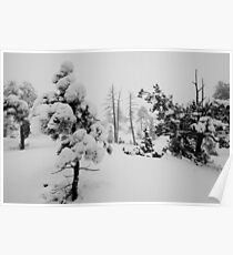 Snowstorm in the forest Poster