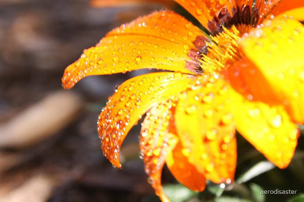 Orange Flower by aerodisaster