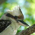 Kookaburra by jindilass