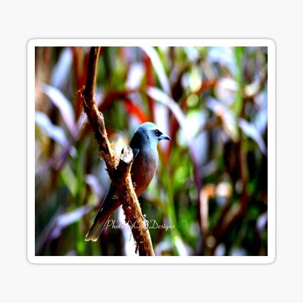 Bird of Colours Sticker