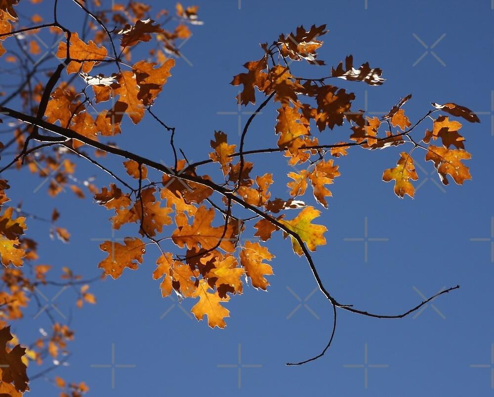 Golden Leaves by CarolM