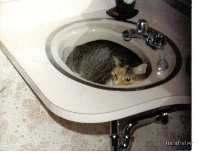 Another cat in the sink by windrider