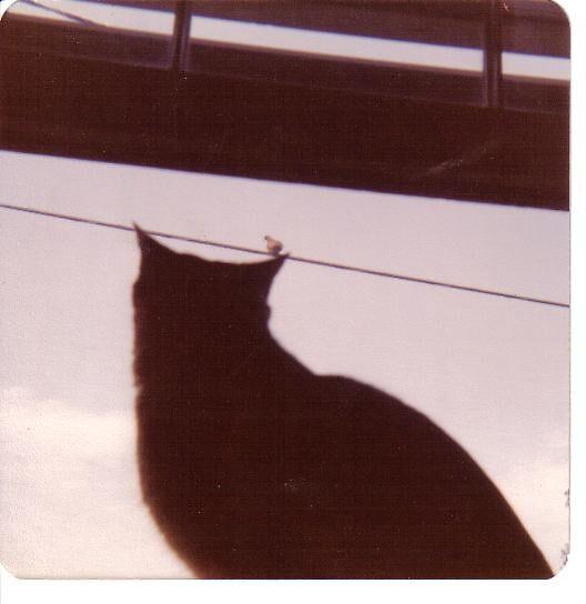 Bird on an a cats ear by windrider