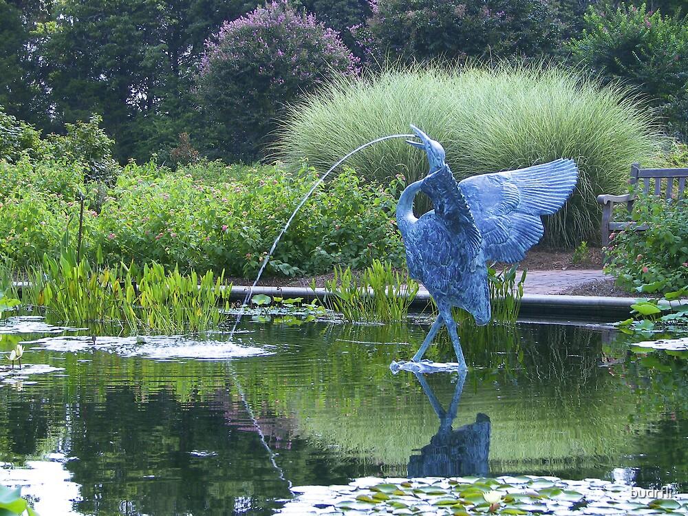 aquatic pond by budrfli