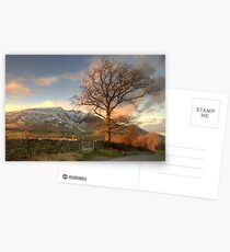 Blencathra and Tree Postcards