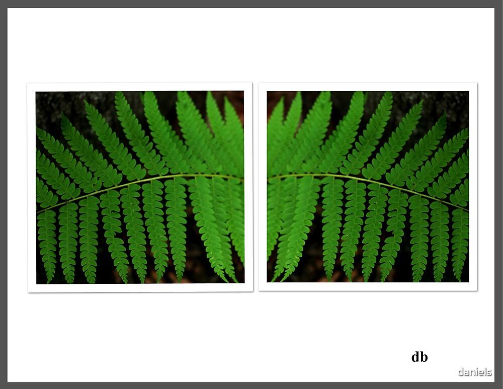 fern by daniels