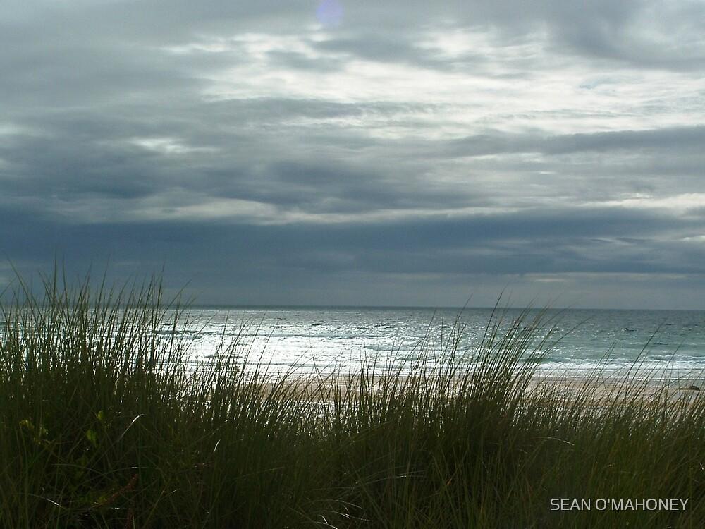 The Cornish beech by SEAN O'MAHONEY