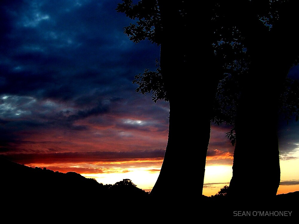 Two Tree's as the sun goes down by SEAN O'MAHONEY