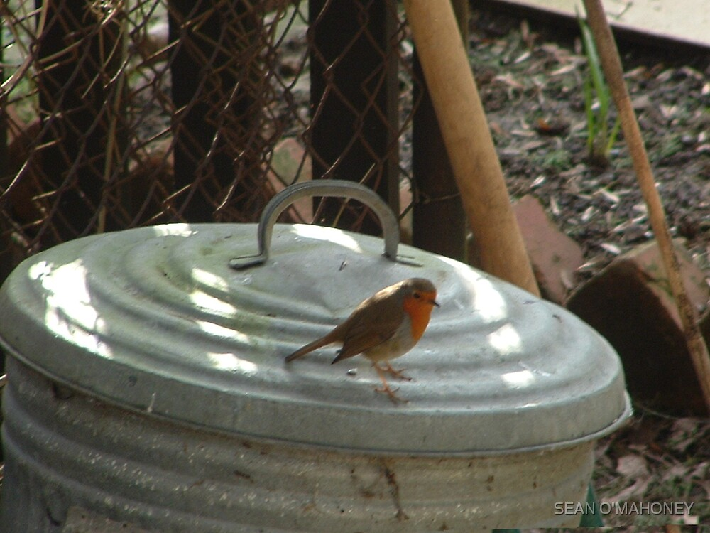 Robin the bin by SEAN O'MAHONEY