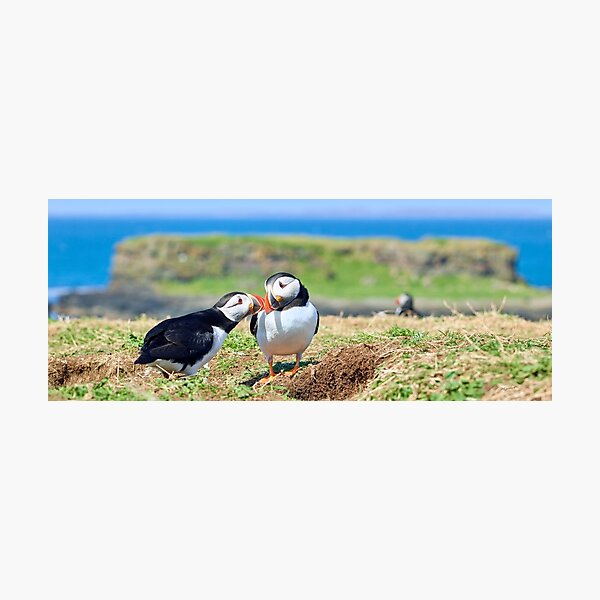 Puffin Love Photographic Print