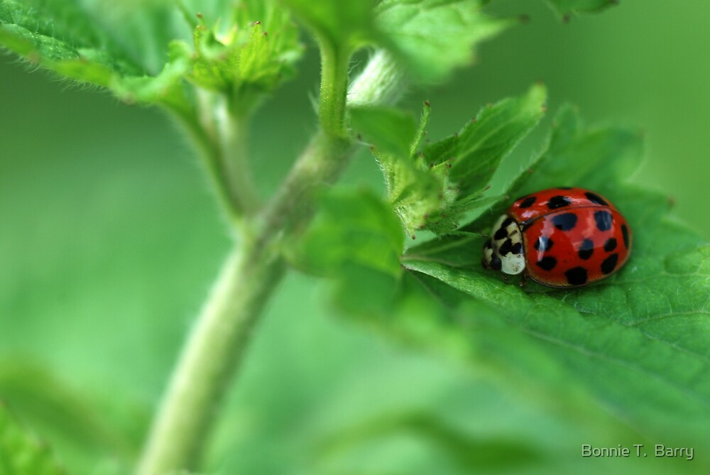 Ladybug Hideaway by Bonnie T.  Barry