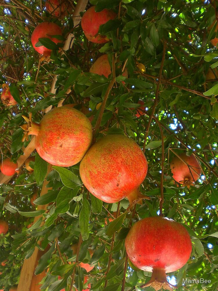 Pomegranates by MamaBee