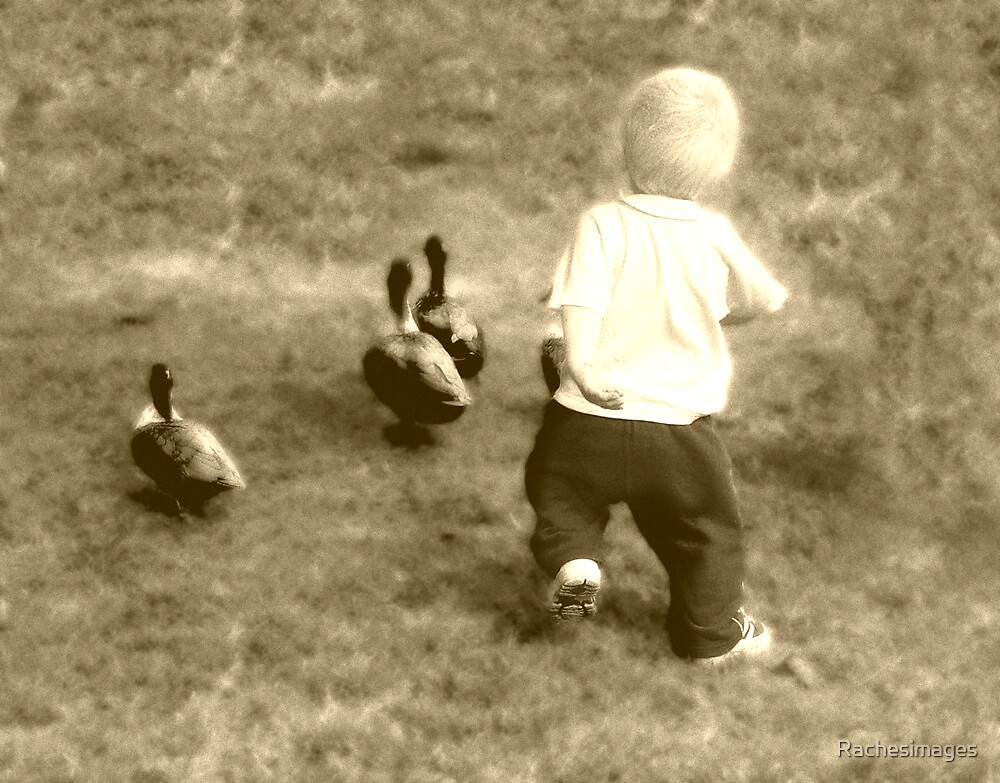 chasing ducks by Rachesimages