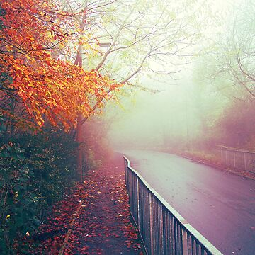 Misty Days by faizan