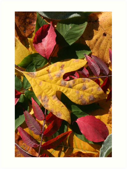 Fall Colors by Andrew & Wendy Hahn