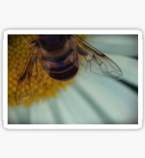 The Beauty of Bee Wings Sticker