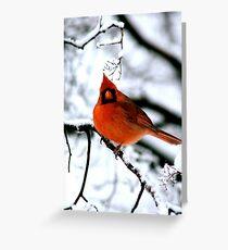 Cardinal in Tree Greeting Card