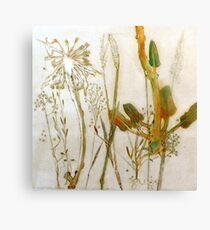 Mornington Peninsula Grasslands 9 Canvas Print
