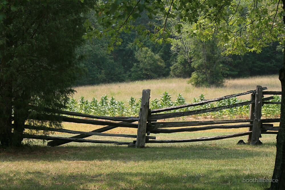 Tobacco Field by boothillbruce