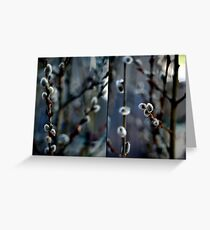 Pussywillows Diptych Greeting Card