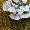 DADDY LONG LEGS SPIDER (ON a flower/foliage)