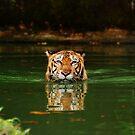 Sumatran Tiger by gromol